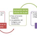 Ciclo de Los Péptidos de Colágeno